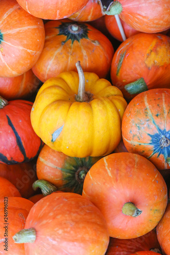 Pumpkin at market in Thailand - 246996023