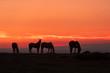 Wild Horses Silhouetted in Desert Sunrise