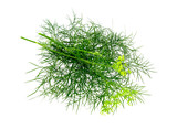 Dill bunch isolated on white.  Dill herb leaves. Flowering plant - 247037610