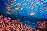 SCUBA diver with fish in a coral reef - 247038826