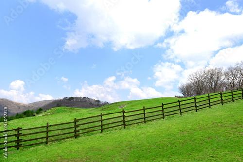 목초지 들판 자연 풍경 백그라운드 이미지