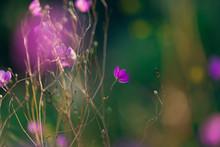 "Постер, картина, фотообои ""pink fame flower in garden"""