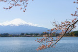 Mount Fuji framed by cherry blossom trees, Japan