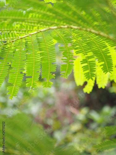 green leaves photo under below leaf tree nature background space for white