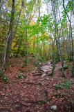 Forêt d'automne - 247138229