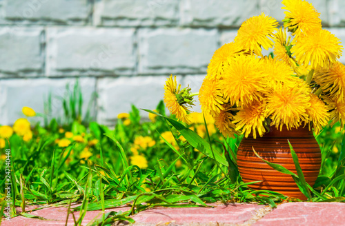The first spring dandelions flowers in an earthenware vase on a background of green grass and brick wall background natural