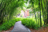 Stone walkway among ferns and green bamboo trees in park