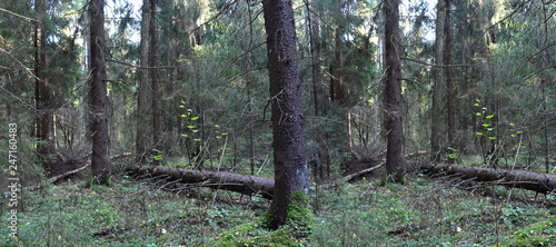 Green forest landscape. - 247160483