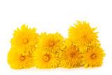 Fototapeta Dmuchawce - dandelion flowers © Scisetti Alfio