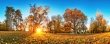 Trees with multicolored leaves on the grass in the park. Maple foliage in sunny autumn. Sunlight in early morning in forest - 247174277