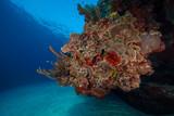 Reef (Grand Cayman, BWI)