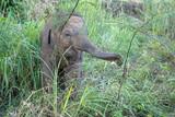 Elefantenbaby - 247181292