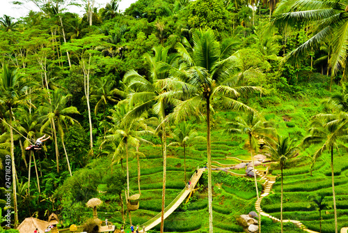 fototapeta na ścianę Green rice field terrace view with rice, tree, plantation for travel destination for school family holiday in the spring summer in a remote island
