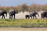 Large group of elephants playing in the mud