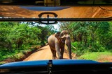 View of male elephant from the seat of a safari jeep in Yala National Park
