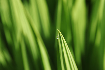 A raindrop on a green leaf. Nature and beauty background image.