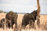 Elefante se arrasca con el arbol, familia esperando.  - 247212238