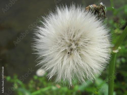 W świecie roślin - 247214268