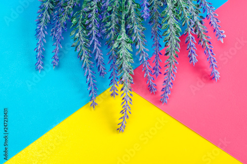 Bouquet of lavender lies on colorful blue yellow pink background