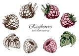 Set of pink raspberries with leaves. Hand drawn vector illustration. Isolated elements for design.