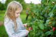 Leinwandbild Motiv Cute little girl picking fresh berries on organic raspberry farm on warm and sunny summer day.