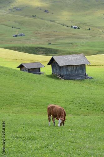 Foto Murales Un cavallo al pascolo
