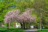 Blühender Apfelbaum im Stadtpark von Mainz