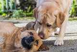 Un par de perros - 247328842