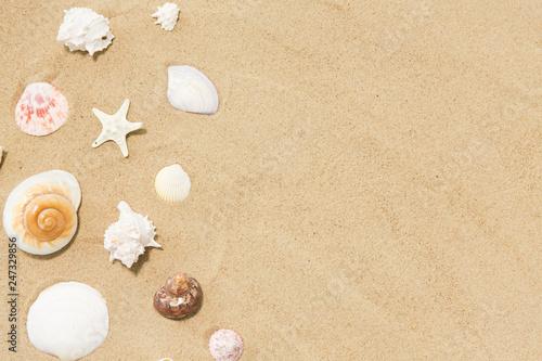 vacation and summer holidays concept - seashells on beach sand - 247329856