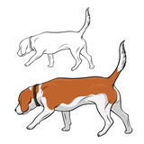 The dog is sniffing. The dog is Beagle breed is hear smell. Vector illustration.