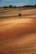 Lonely tree on an empty brown plowed field