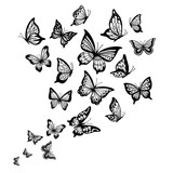 Butterflies flow. Butterfly wing, spring flying insect and flight wave vector background illustration - 247408244