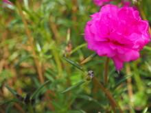 """Постер, картина, фотообои """"pink flower"""""""