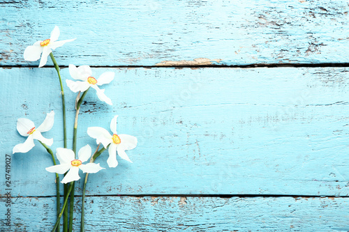White narcissus flowers on blue wooden table - 247419027