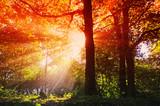 Fototapeta Las - Sonnenstrahlen im Wald © Fotolyse