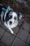 Dog goes on a leash - 247457653