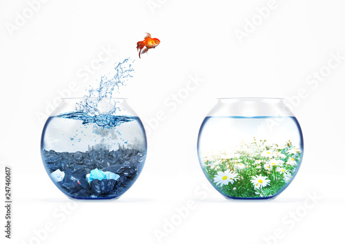 Improvement and moving concept with a goldfish jumping from a dirty aquarium to a clean one - 247460617