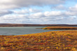 Tundra Scene from Canadian Arctic in the fall by a lake