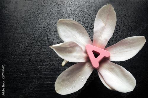Magnolia grandiflora ft8104_3035 - 247494642