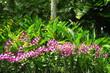 Orchidées  dans un jardin tropical