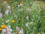 野原の花畑