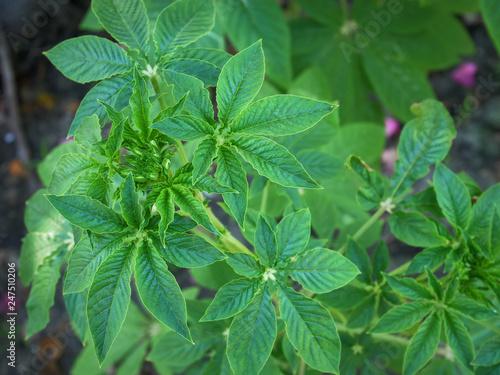 fototapeta na ścianę High Angle View of Fresh Green Plant