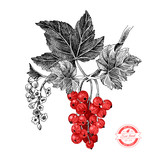 Red currant with leaves and flowers - 247515220