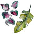 Leinwanddruck Bild - Green leaf. Exotic tropical hawaiian summer. Watercolor background illustration set. Isolated leaf illustration element.