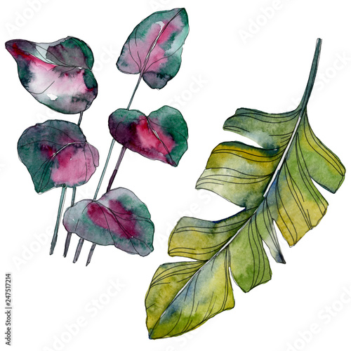 Leinwandbild Motiv Green leaf. Exotic tropical hawaiian summer. Watercolor background illustration set. Isolated leaf illustration element.