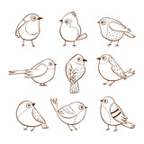 Hand drawn cute little birds in different poses, isolated on white background. Vector illustration.
