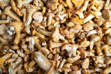 Background of fresh and organic whole mushrooms, closeup