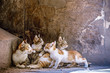 Little kittens are played at the mom's on granite stairs in the mosque