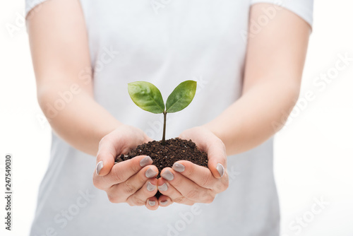 selective focus of woman protecting ground with green plant isolated on white