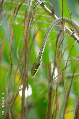 fototapeta na ścianę Rough Green Snake on Green Background - Изображение